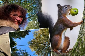 Zu viele überfahrene Eichhörnchen: Anwohnerin hat diese tolle Idee!