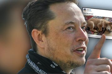 Elon Musk: Elon Musk tweetet über Ankunft seines neuen Welpen: Irre, was dann auf dem Krypto-Markt passiert!