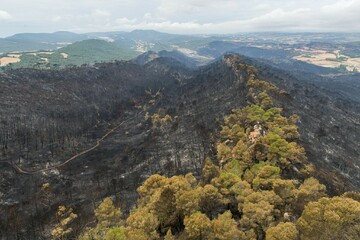 Sardinien, Barcelona und Co.: Nun hat auch Bulgarien mit Waldbränden zu kämpfen
