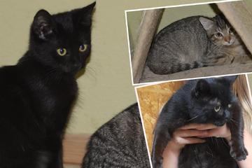 Tierhilfe am Limit: Dutzende Katzen suchen nach einem Zuhause