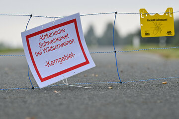 Kampf gegen Afrikanische Schweinepest: Brandenburg plant zweiten Zaun an polnischer Grenze