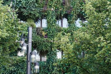 Mit Preis ausgezeichnet: Pflanzen an Hausfassade verbessern Stadtklima