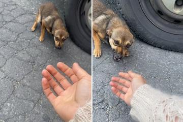 Ausgesetzter Hund zittert vor Angst: In den Armen seiner Retterin ist er plötzlich wie ausgewechselt