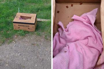 Unfassbarer Fund in Sachsen: Wollte hier jemand Katzen entsorgen?