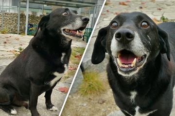 Freundlicher Hund wartet schon so lange: Warum will niemand Ringo haben?
