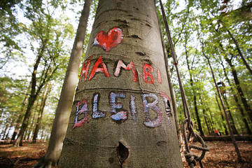 Protestcamp am Hambacher Forst muss geräumt werden
