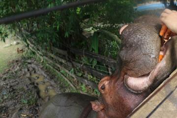 Pablo Escobars horny Nilpferde überrennen Kolumbien - die Regierung reagiert drastisch