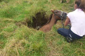 Dramatische Tierrettung: Pferd bricht samt Halterin in Feldweg ein