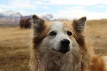 Drei Wochen nach Hunde-Adoption: Kind (7) von Vierbeiner getötet