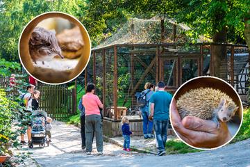 Zoo der Minis: In Aue kommen die Kleinsten groß raus