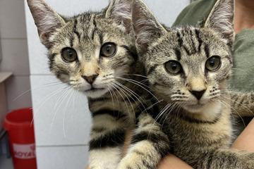 Wegen Krankheit: Katzen nach Kauf einfach ins Tierheim gebracht!