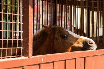 Horror-Aufnahmen: Mann bricht in Stall ein und vergewaltigt eines der Pferde