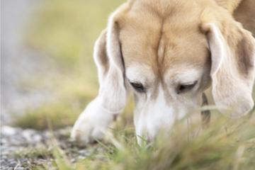 Hundewelpe während Training totgefahren: Polizei sucht nach den Tätern!