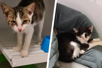 Tierheim rettet verstoßene Katzenbabys aus Wald!