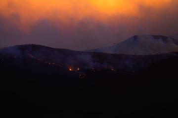 Dengan hewan-hewan ini, Australia ingin bertindak melawan kebakaran hutan!