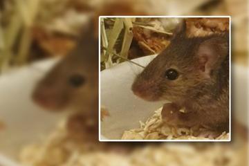 """Maus im Sofa geboren: """"Fürchtegott hat dem Gevatter Tod den Stinkefinger gezeigt"""""""