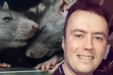 Horror in der Nacht: Ratten breiten sich in Haus aus, laufen über Kopf von Mann herum