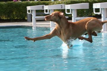 Vierbeiner ins Freibad: Hier dürfen morgen die Hunde planschen