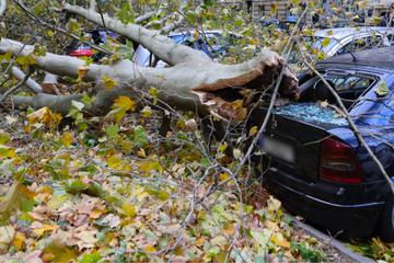 Unwetter-Alarm: Umkippende Bäume zerstören Autos, Zugverkehr eingestellt