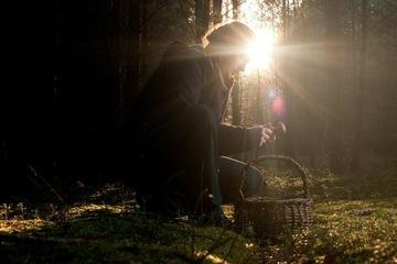 35 Jahre nach Tschernobyl: Bundesamt warnt vor radioaktiv belasteten Pilzen in den Wäldern