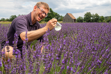 Sachsen blüht blau: Lavendel macht Lausitz zur Provence