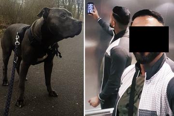 Umgang mit Hundewelpen bringt Rapper FaMo erneut vor Gericht