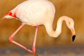 Frankfurt: Ordnungsamt beschlagnahmt einsamen Flamingo mit Fußproblemen
