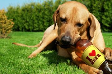Na, Prost! Hersteller bringt sein erstes Bier für Hunde auf den Markt