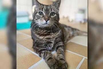 Tragische Trennungs-Geschichte: Diese Katze sieht ihren Besitzer nie wieder