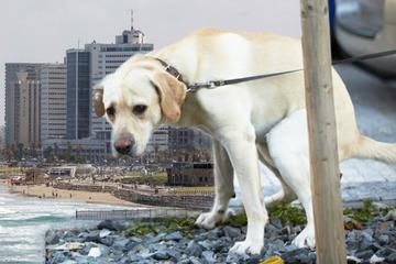 Zu viele Hundehaufen! Stadt sammelt DNA-Proben