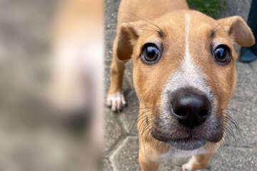 Hund wird völlig entkräftet aufgelesen: Dann stehen ihm schwere Zeiten bevor