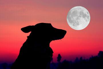Horoskop heute: Tageshoroskop kostenlos für den 12.06.2021