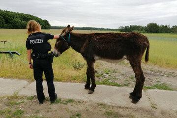 Ausgebüxter Esel ruft Polizei auf den Plan