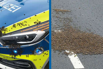 15.000 Bienen landen plötzlich mitten auf Straße: Sperrung und Polizeieinsatz