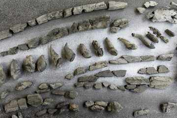 Bedeutsamer Fund! Forscher finden elf Millionen Jahre alte Knochen