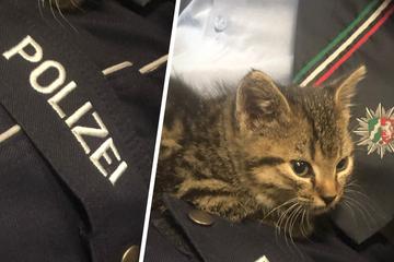 Im Kellerschacht gefangen: Polizei befreit niedliches Katzenbaby