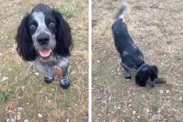 Frau lacht Tränen, als sie den Fund ihres Hundes sieht