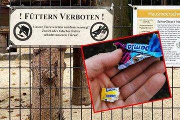 """""""Wir sind stinksauer!"""": Illegale Fütterungen im Zoo der Minis in Aue"""