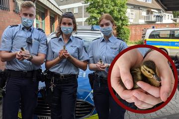 Sieben Küken von Autobahn gerettet, doch für die Entenmutter kommt jede Hilfe zu spät