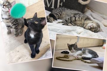 Willkommen bei Familie Schnurrlock: Neues Zuhause für Patchwork-Kätzchen gesucht