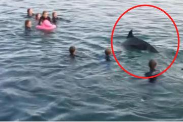 Achtung, Badegäste: Hier treibt ein notgeiler Delfin sein Unwesen