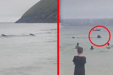 Menschen baden gelassen im Meer, dann sind plötzlich alle erstaunt