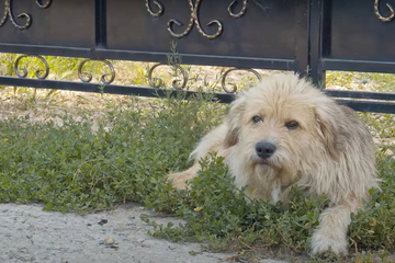 Hund wartet seit einem Jahr vor dem Haus seines Herrchens: Der Grund ist bitter!
