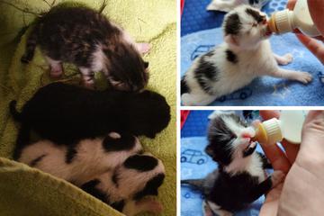 Herzlos ausgesetzt!? Polizei rettet vier neugeborene Katzenbabys vor dem Tod