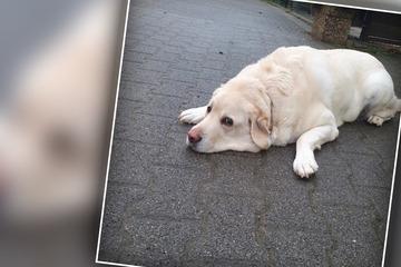 Hund Balou wird bald blind sein, doch sein Schicksal ist noch weitaus schlimmer