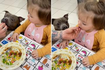 Kleines Wunder: Kind isst nur Gemüse, wenn der Hund es zuerst probiert