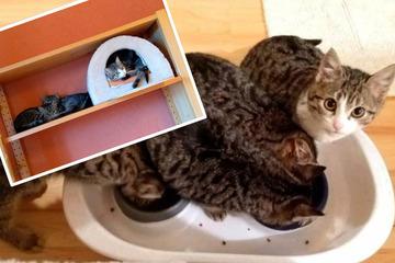 Rescatar gatitos de la calle: así hacen ahora Greta, Gita, Jessa y Gina