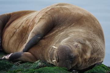 Tierischer Besuch! Extrem seltener Gast auf Nordsee-Insel gesichtet