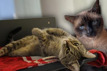 Besitzer verstorben und überfordert: Finden Katze Lisa und Kater Prince nun doch noch ein Happyend?