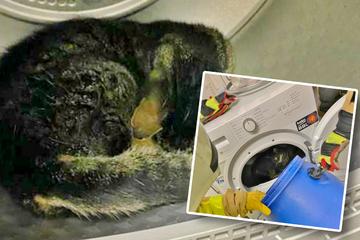 Aggressive Katze besetzt fremden Wäschetrockner, Feuerwehr greift zu Trick!